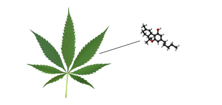 marihuana-kannabinoidy