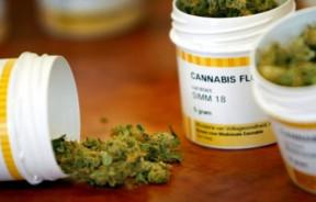 Sondaż medyczna-marihuana-w-polsce-sondaz