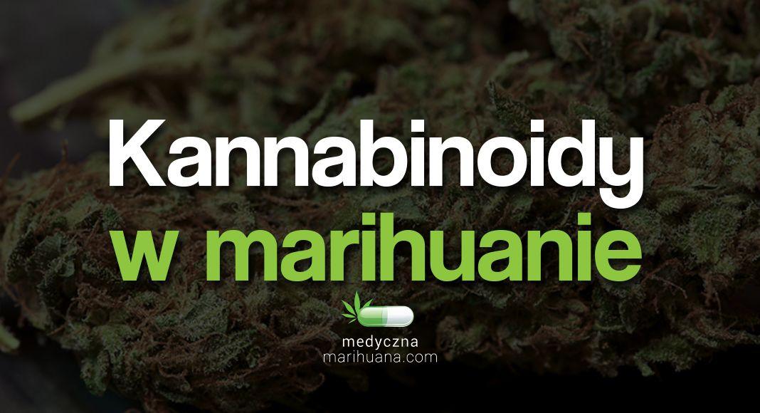 Polsce mamy medyczną marihuanę