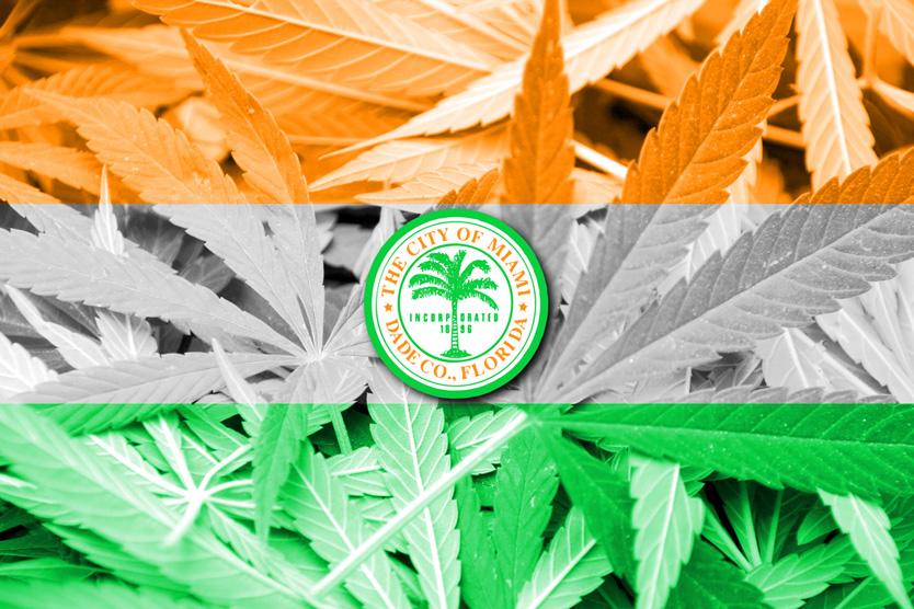 marihuana bogata w CBD