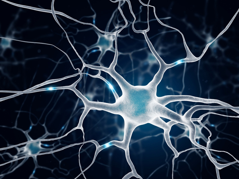 neurogeneza CBD