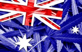 Australia zalegalizowała medyczną marihuanę