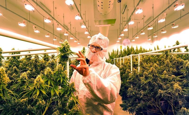 Izrael eksporterem medycznej marihuany