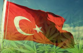 Turcja legalizuje marihuany