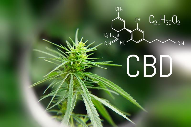 Kannabinoidy stany zapalne