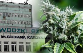 leczy medyczną marihuaną