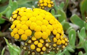 rośliny kannabinoidy