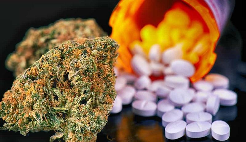 leczonych medyczną marihuaną