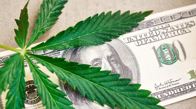uprawiać marihuanę