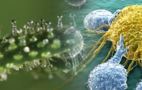 kannabinoidy leczeniu nowotworów