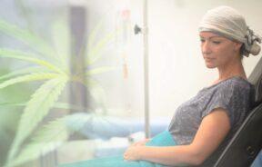 CBD w chemioterapii