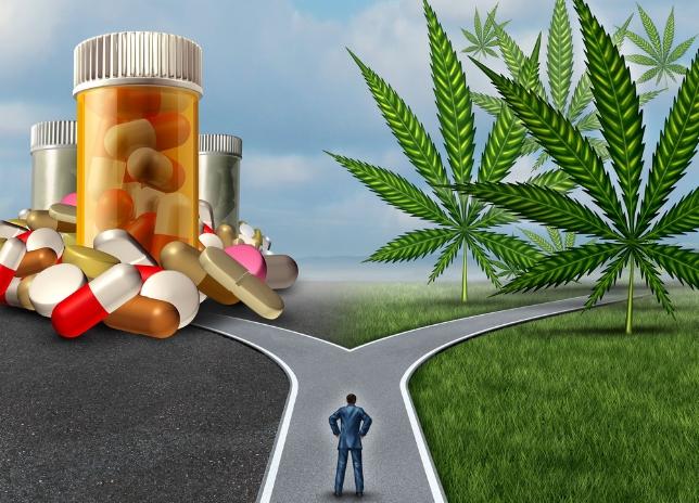 konopie działanie opioidów