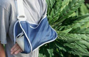 kannabinoidy złamane kości