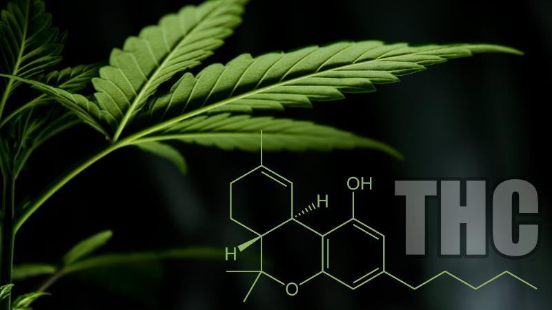 właściwości THC korzystnych