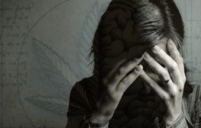 CBD THC schizofrenii