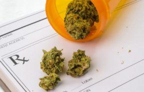 medyczna marihuana aptekach