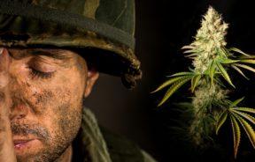 Marihuana Zespół stresu pourazowego