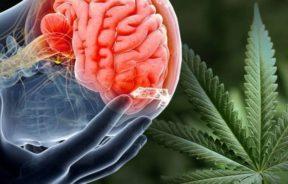 marihuana chroni mózg