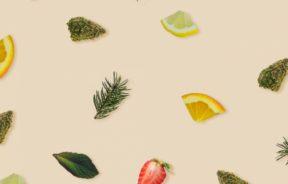 terpeny konopnej aromaterapii