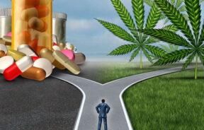 marihuana bardziej pomaga czy szkodzi