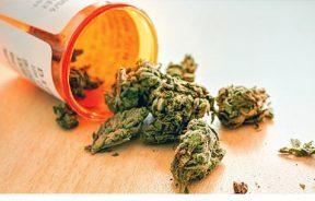 onz zmiana klasyfikacji marihuany