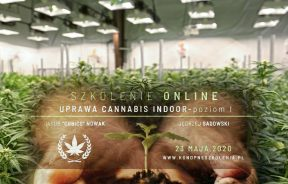 uprawy indoor