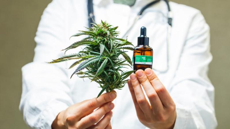 Francja będzie dystrybuować medyczną marihuanę