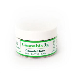 Canada Haze cannabis susz CBD BioHemp