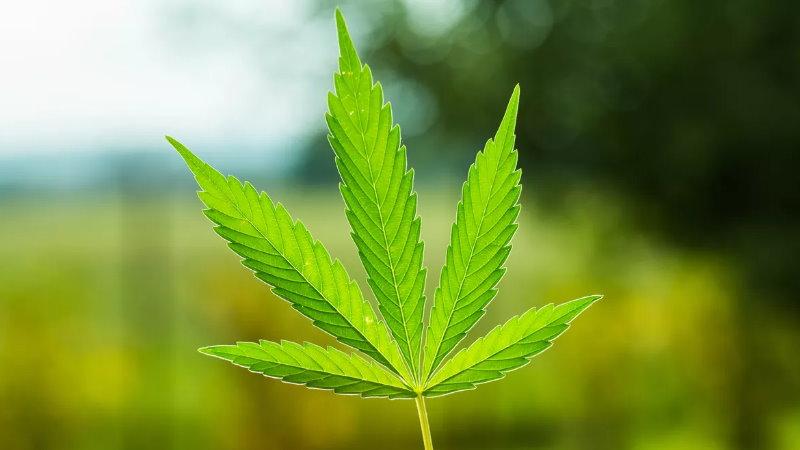 Parlamentarny Zespół ds. Legalizacji Marihuany