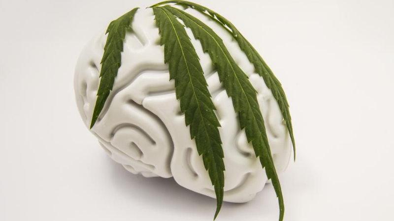 CBD i THC chronią mózg i wspierają jego funkcje