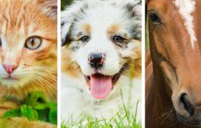 Hemp Care dla zwierząt