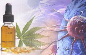THC i CBD na nowotwory przykładowe dawkowanie