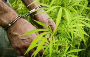 Zespół ds. Legalizacji Marihuany