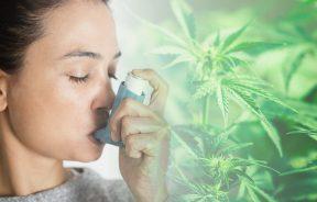 marihuana w leczeniu astmy