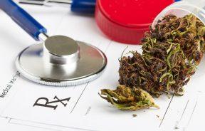 wskazania i przeciwwskazania do stosowania medycznej marihuany