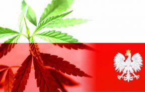 uprawy medycznej marihuany w Polsce Jarosław Sachajko