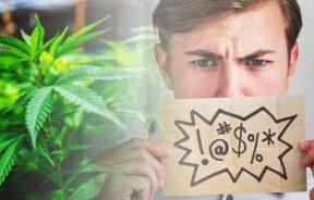 medyczna marihuana w leczeniu objawów zespołu Tourette'a