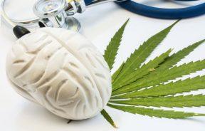 medyczna marihuana choroby psychiczne