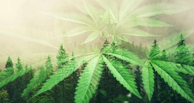 marihuana policja