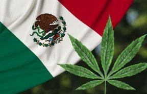 Meksyk dekryminalizuje rekreacyjne używanie marihuany
