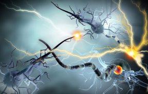 receptor CB3 potencjał