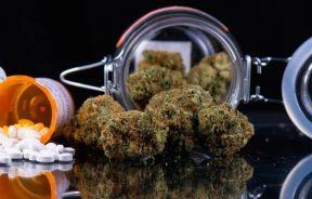 dostępność medycznej marihuany