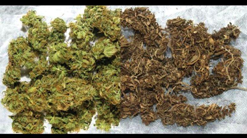 Czy marihuana ma datę ważności