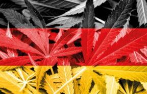 propozycja 6g marihuany na terenie Niemiec
