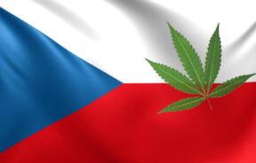 Limit THC w Czechach