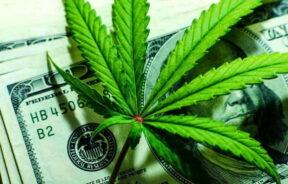 legalna sprzedaż marihuany